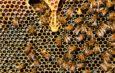 Pamiętajmy o pszczołach!